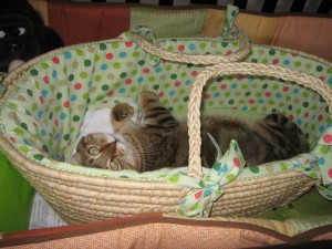 Fubuki making sure the basket is ready for baby